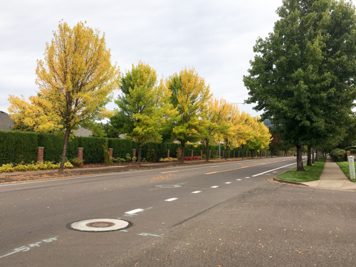 autumn-in-eugene